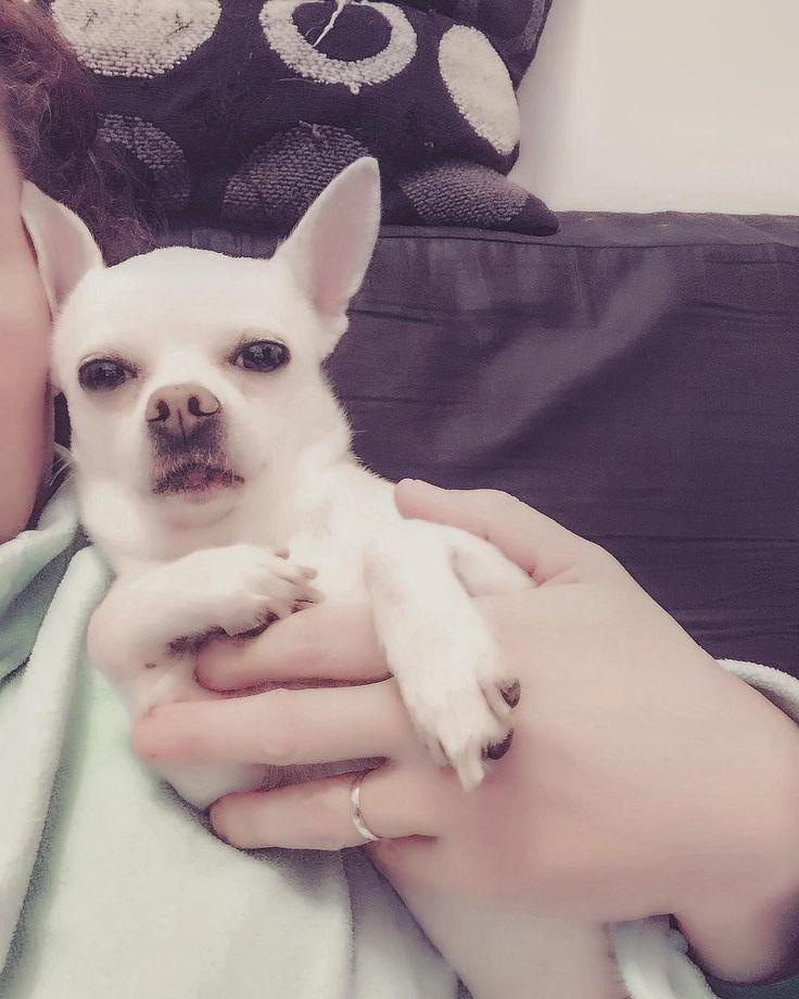 with mom #mydogrules#chihuahua#chihuahuasofinstagram#chiguagua#doggy#dog#puppydog#puppy#mylittleboy#mylittlepuppy#perritos#perros#mascotas#miperroesunico#amoamiperro#miperromifamilia####doggylove#dogofinstagram#nationalpuppyday#chiguagualove#doggyselfie