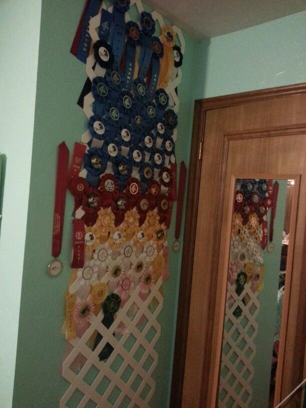 25 Best Ideas About Horse Show Ribbons On Pinterest