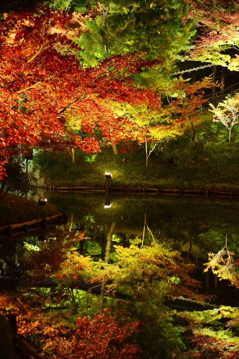 Kodai-ji Temple, Kyoto, Japan #Kyoto #AutumnLeaves #紅葉
