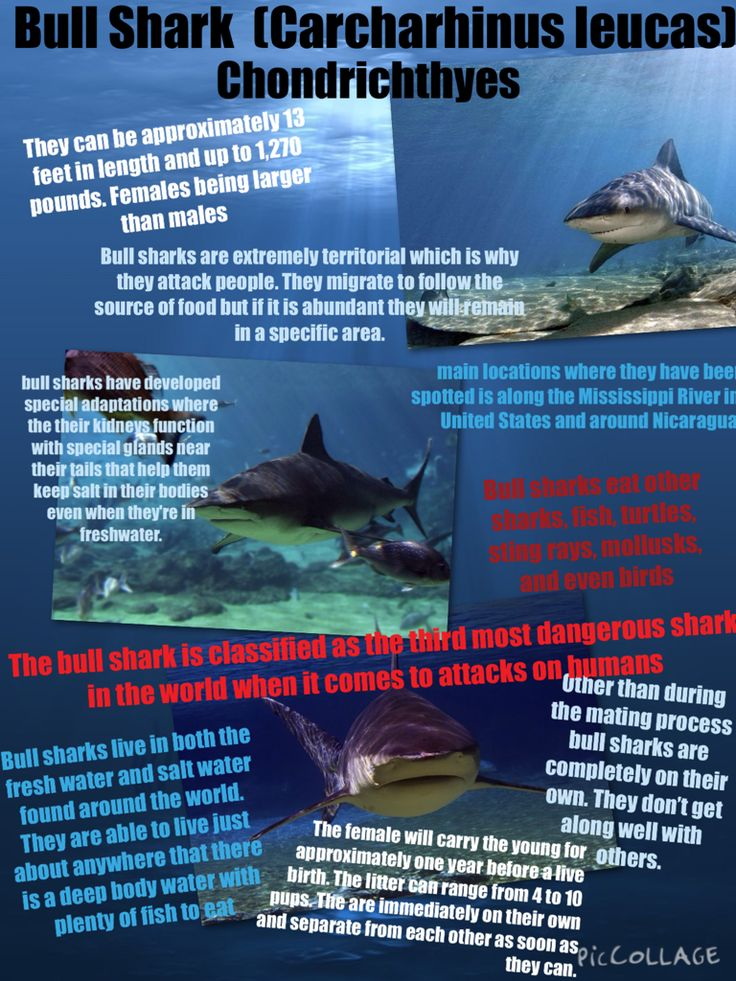 Best Marine Bio B Images On   Website Blue Marlin