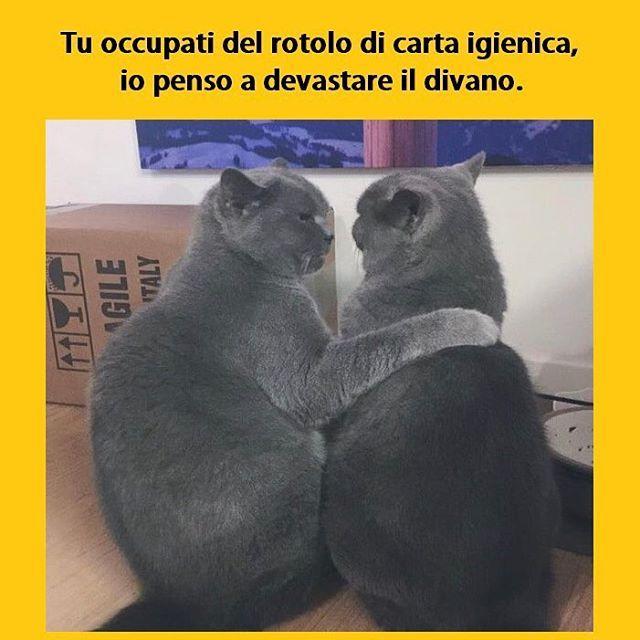 """""""Mi piace"""": 170.1 mila, commenti: 541 - Tua madre è Leggenda (@tmlplanet) su Instagram: """"Attacco congiunto. #tmlplanet #gatto #gatti #animali #casa #divano #bagno"""""""