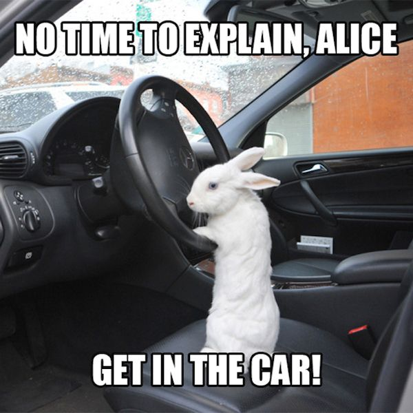 Bunny get away!  Bunnee's behind the wheel!!!!!