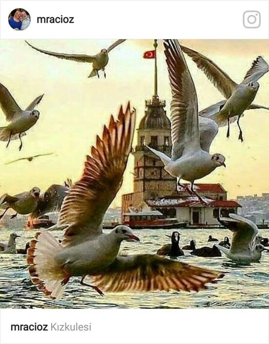 #Galata kulesi #Martılar#İstanbul#