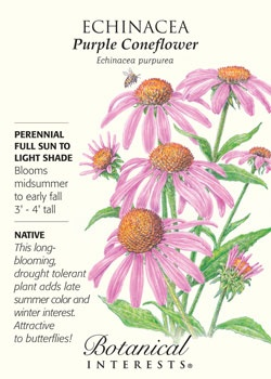 $1.69 Echinacea. Purple Coneflower. Long-blooming drought tolerant plant adds late summer color and winter interest. Attractive to butterflies! NATIVE