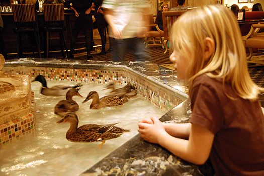 The ducks at the Peabody Hotel – Memphis, Tennessee