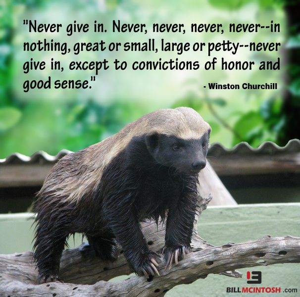 Honey Badger Don't Quit: NEVER give up!