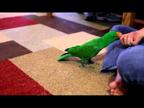 Simon Bird Clicker Training