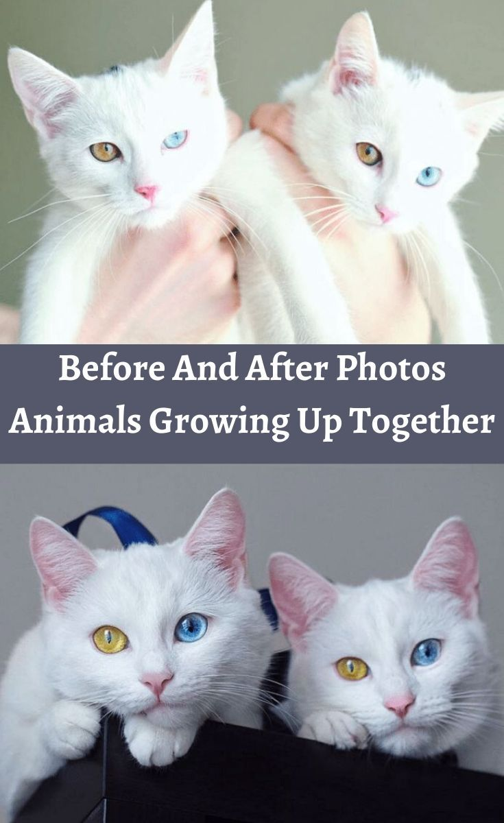 Before And After Photos Animals Growing Up Together In 2020 Baby Animals Pictures Animals Friends Kittens Cutest
