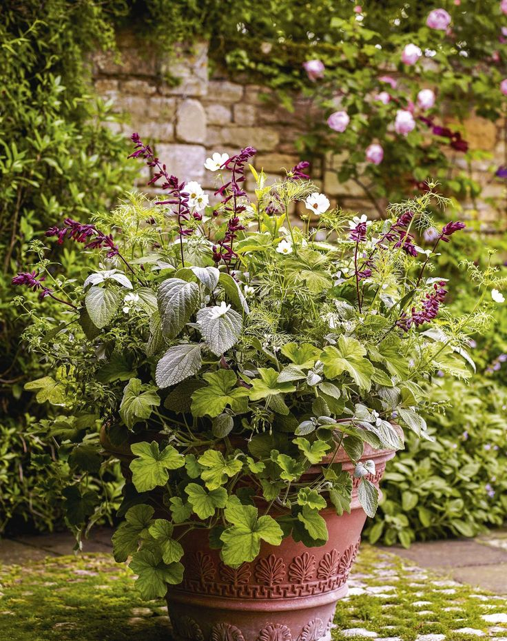 Cosmos bipinnatus 'Purity', Pelargonium tomentosum, Plectranthus argentatus, Plumbago auriculata f. alba & Salvia 'Love and Wishes' ©Andrew Montgomery, Gardens Illustrated, July 2017