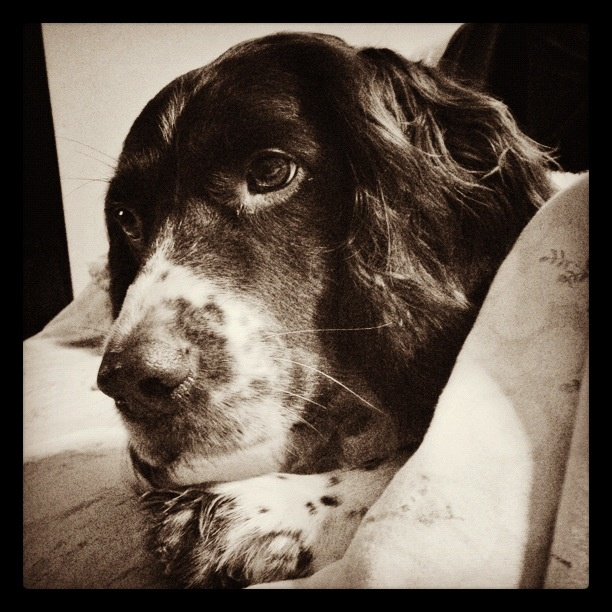 My Dog Lex..