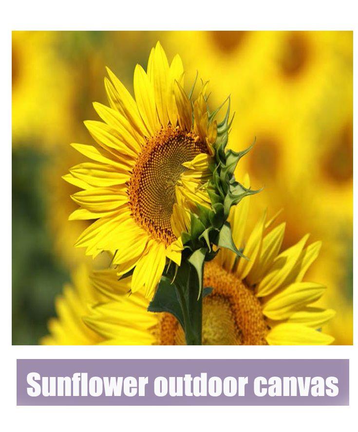 Beautiful Sunflower outdoor canvas!