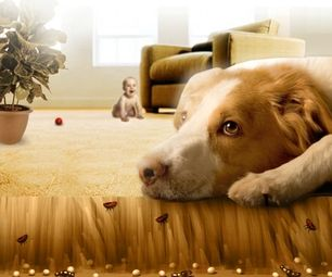 kill fleas in carpets, dogs, cats , ect.
