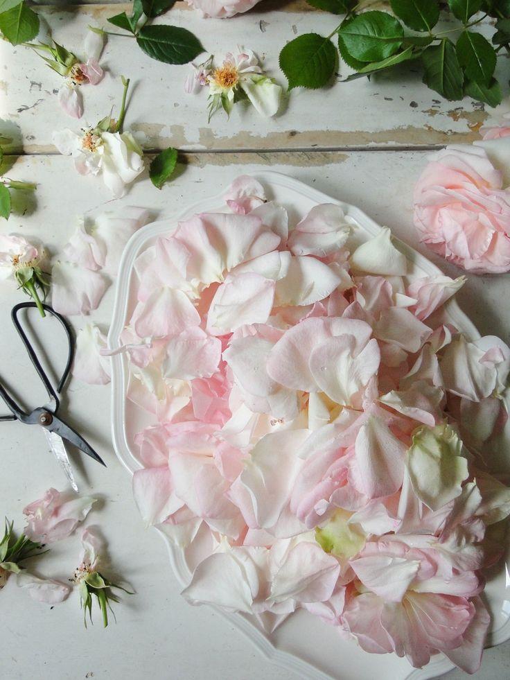roses (making rose & raspberry jam)