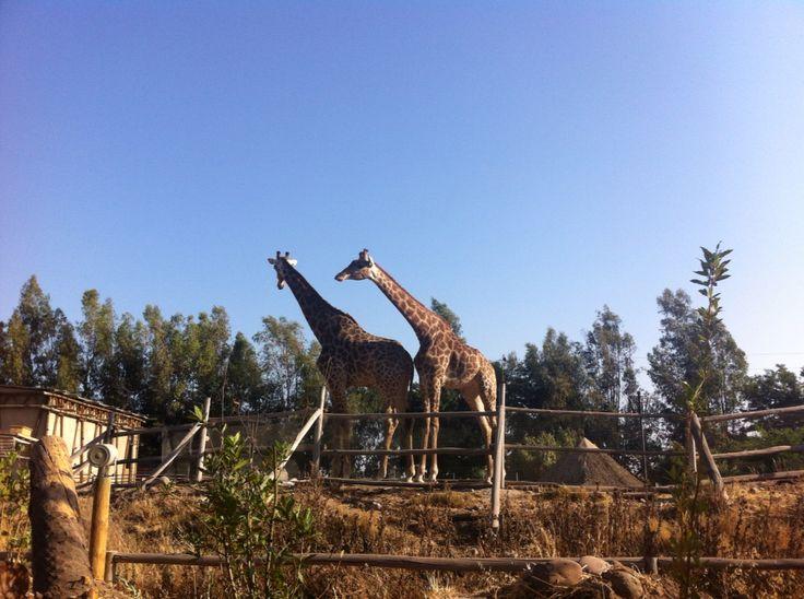 Cielos despejados - buin zoo - Santiago de Chile. Foto tomada por Cristian Puebla