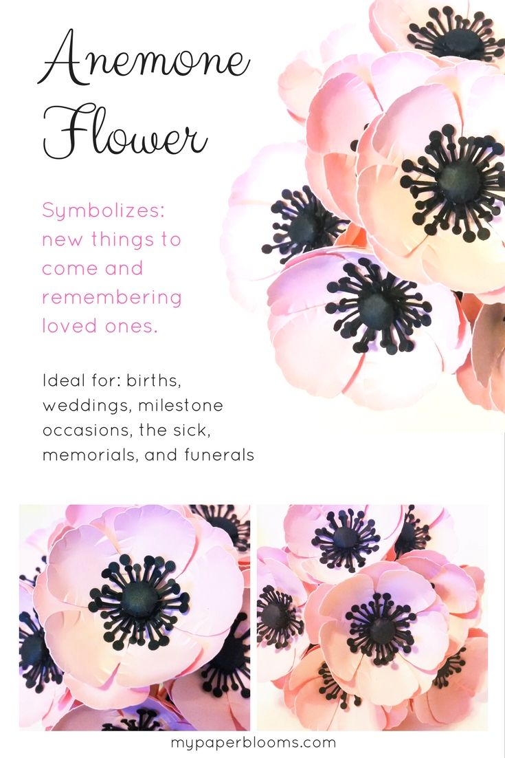The Anemone is said to symbolize the anticipation and excitement for something in the future because something bright is always around the corner no matter how bleak things may currently seem. They are a reminder that we should look forward to the future while remembering the ones we love. Order some handmade paper Anemones in…
