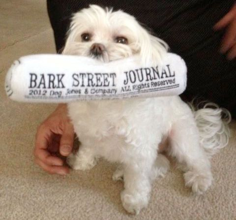 #dressinglola #puppy #spoileddog | $11.99 Bark Street Journal Dog Toy | Designer Puppy Boutique at Glamourmutt.com
