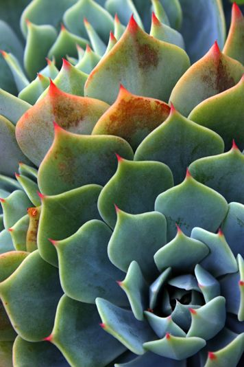 ~~Succulent by Jenny Ross~~ | Macro Photography ~ Details ...