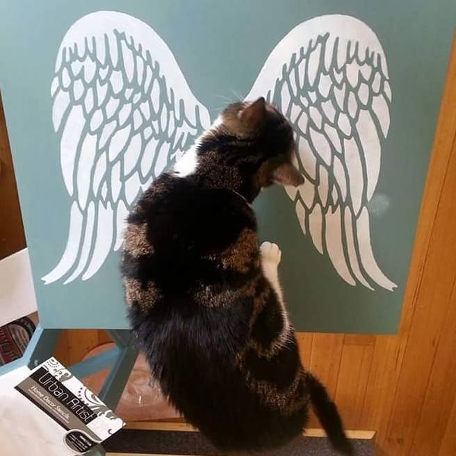 Clever cat, awesome stencilling #barleycornvintagestencils #angelwings #clevercat #stencilledwings #angelwings #frenchstencil