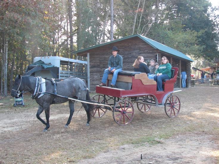Buggy Ride, Grant Christmas Tree Farm, Louisiana