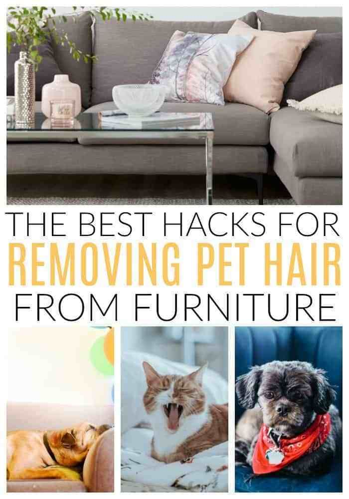 Best Hacks For Removing Dog And Cat Hair Diy Passion Pet Hair Removal Furniture Pet Hair Removal Cleaning Cat Hair