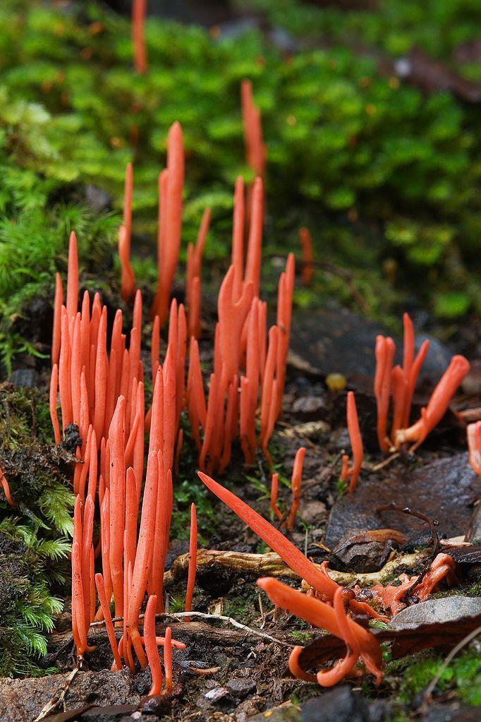 Il existe des milliers d'espèces de champignons aux formes, aux tailles et aux couleurs toutes différentes les unes des autres... Ils se retrouvent même là où on s'y attend le moins... Aujourd'hui DGS vous fait découvrir 18 variétés de champi...