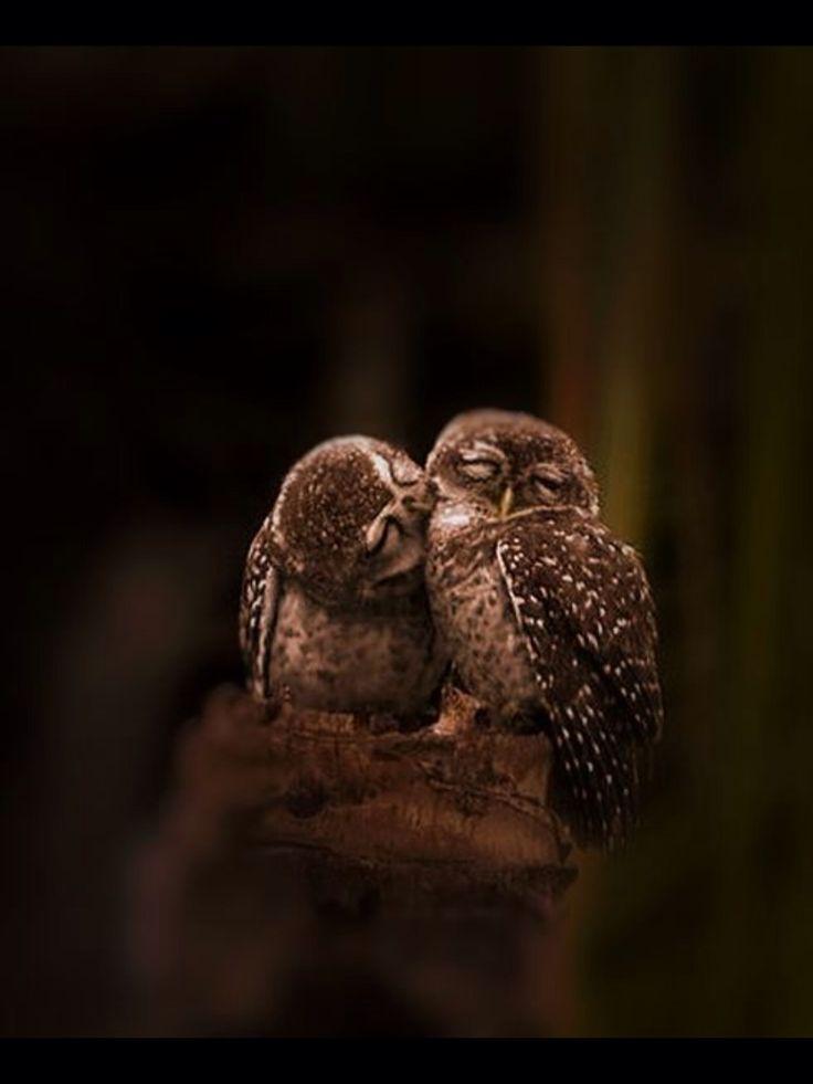 Owl's kissing :) #beautiful #amazingphoto