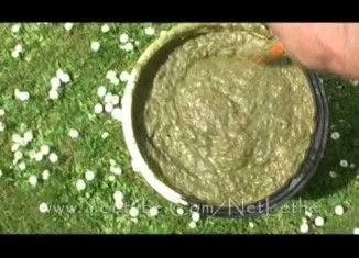 You'll Be Surprised At How You Can MAKE Organic Liquid Fertilizer!!!