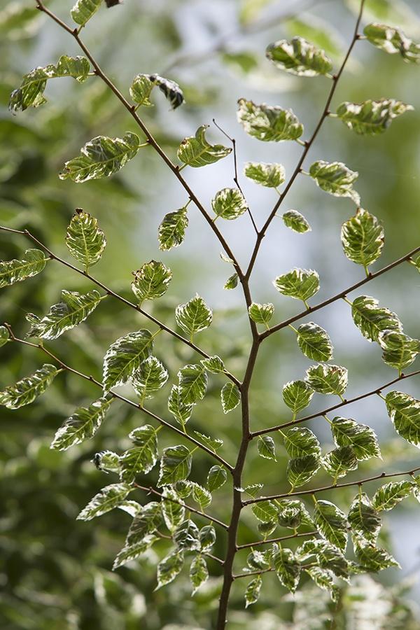 leaf,KOREA  photo by e.s lee