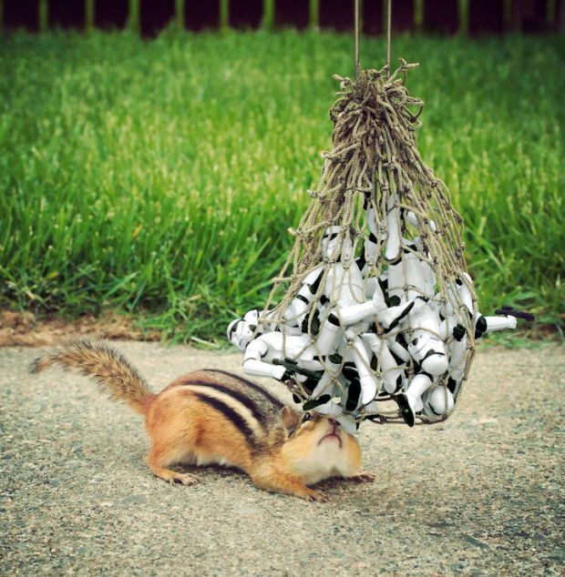 Best Images About CUTE ANIMALS On Pinterest Animal Pictures - Adorable chipmunks go on playful adventures with lego star wars toys