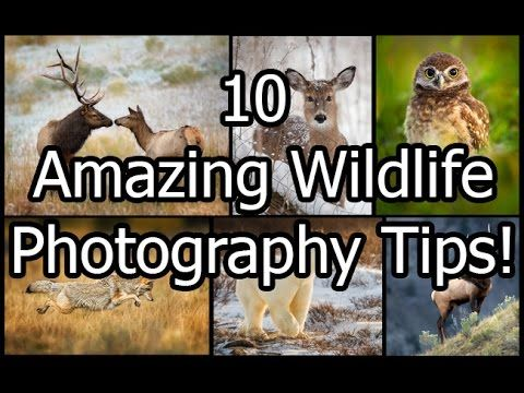 Tips for Wildlife Photography | Homesteading