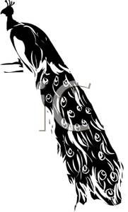 Silhouette of A Peacock With Long Feathers - Royalty Free Clipart Picture