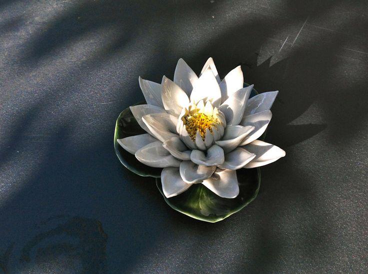 Uniek exemplaar van de witte waterlelie