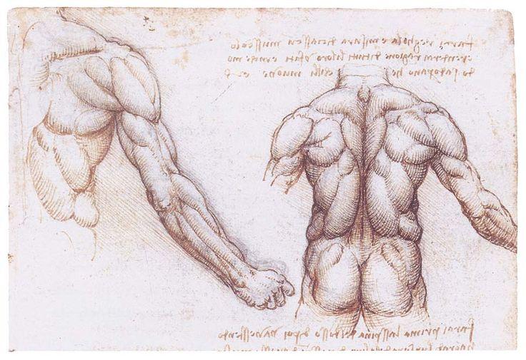 Leonardo da Vinci man's back