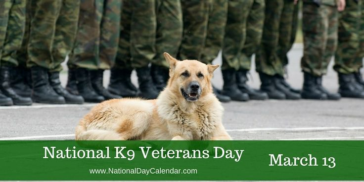 NATIONAL K9 VETERANS DAY March 13th recognizes National K9 Veterans Day. A lot of things changed after the bombing of Pearl Harbor in 1941. Oil, leather and rubber were rationed. Men were drafted. Women rolled up their sleeves and built war supplies.  And dogs were called to duty. During the