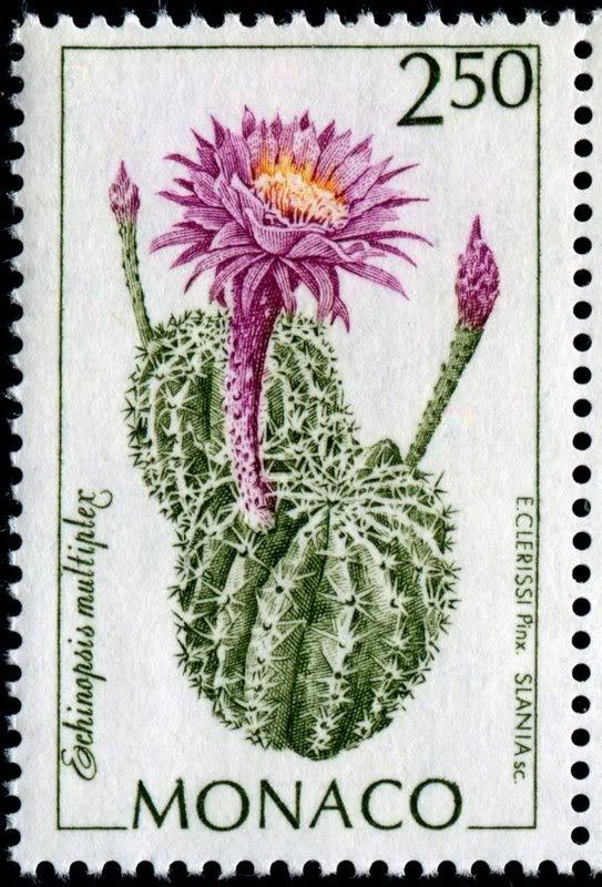 Monaco Easter Lily Cactus
