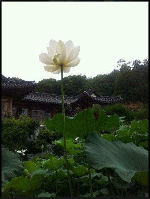 연꽃과 한옥  Korean Traditional Building