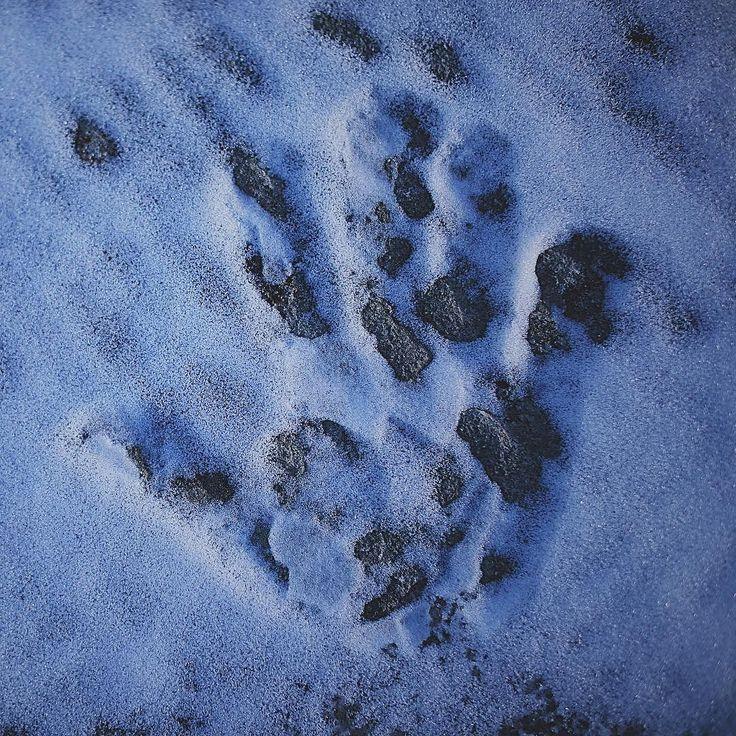 Da piccolo non vedevo l ora che nevicasse per mettere la mia mano sulla neve fredda.  #snow #hand #toscana #neve #italia #Semplice #freddo #freddocane #lorociuffenna #instasnow #igersarezzo