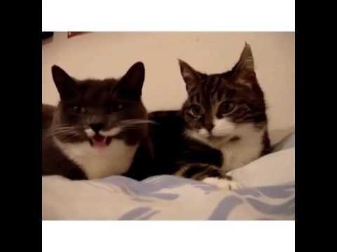 Kedilerin Sohbeti | Mert Güler