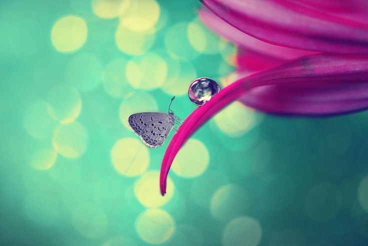 Catch my dreams by Diens Silver on 500px