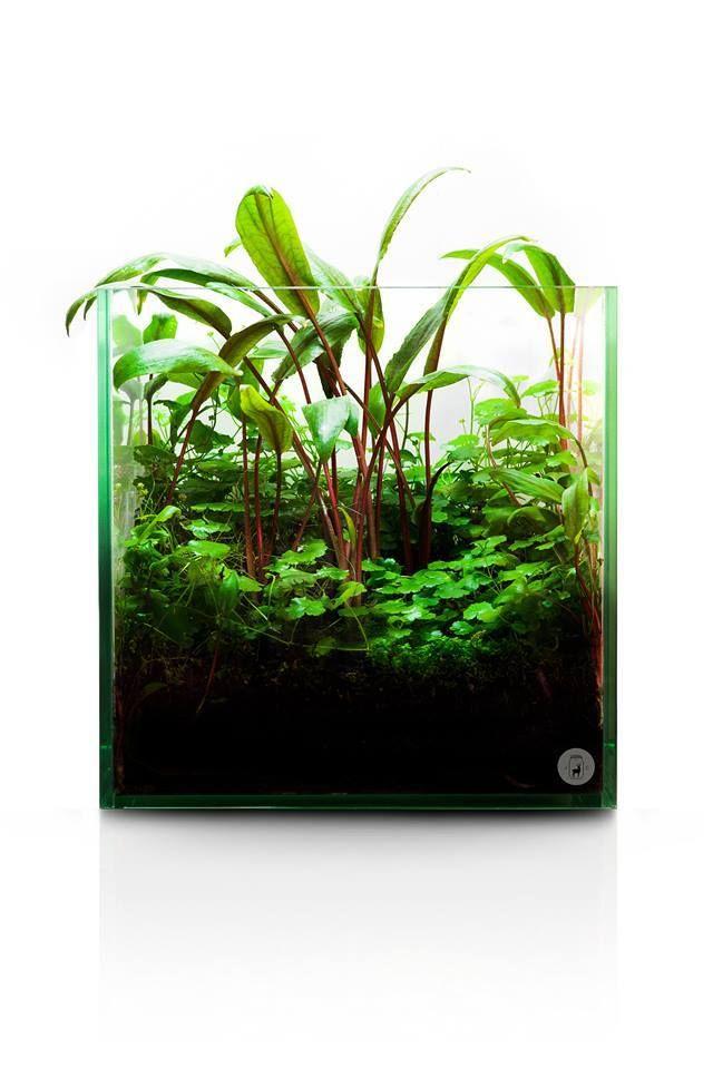 95 best aquascapewabis images on pinterest fish tanks aquariums and fish aquariums - Petit aquarium design ...