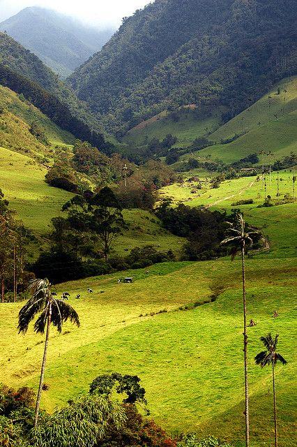 Valle de Cocora, salento