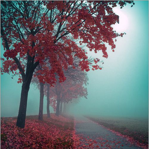 Red leaves and blue fog