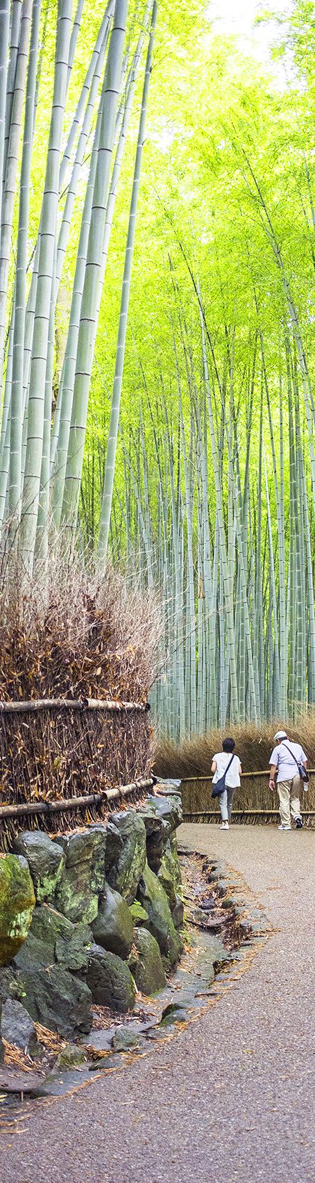 Arashiyama Bamboo Grove #Kyoto; an atmospheric 200 metre path through swathes of stories high bamboo. Best viewed as a breeze ripples through the dark green bamboo, it's particularly stunning in December when the groves are illuminated by traditional lanterns.