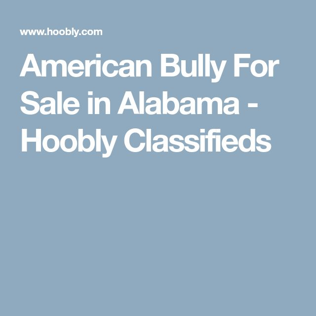 American Bully For Sale in Alabama - Hoobly Classifieds