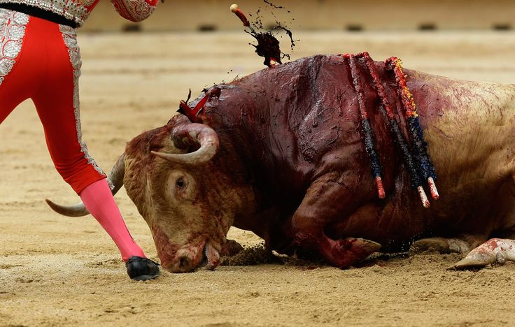 A Different Bull – A Different Day – Finally Killed