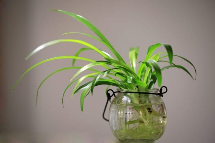What do you need to grow plants in water? If you don't ...