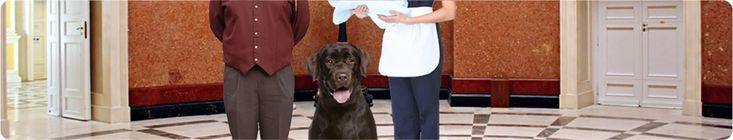 Hoteles que aceptan perros