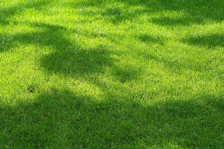 Lush, green lawn