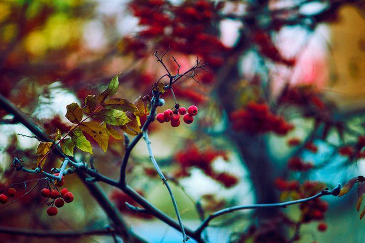 Autumn colors #nature #red #orange #yellow #trees
