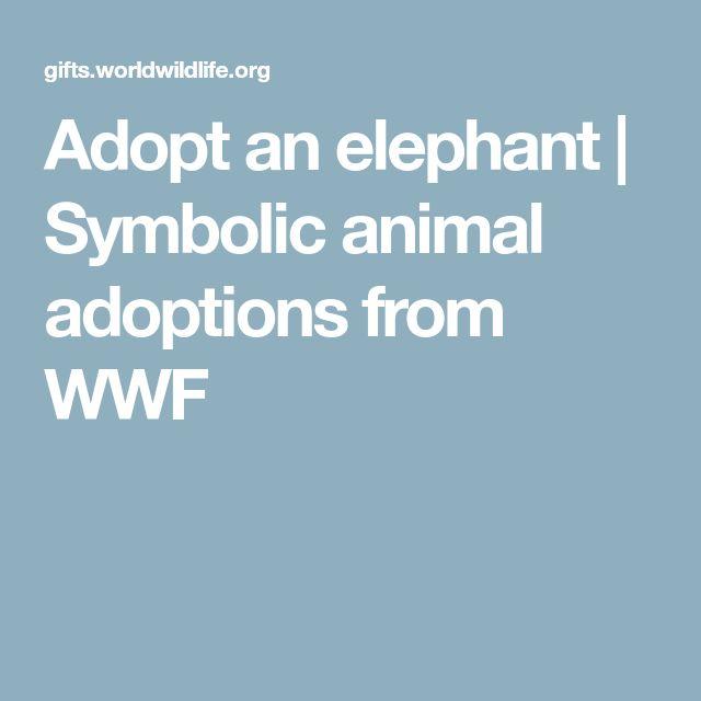 Adopt an elephant | Symbolic animal adoptions from WWF